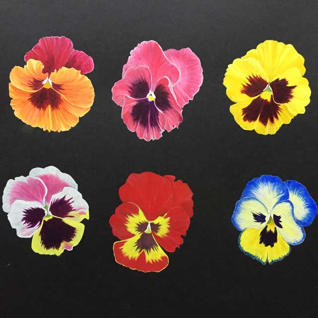 Pansies in Acrylic